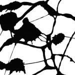 vesna klacar-nedimovic - black & white I - 2010 - giclée print on hahnemuhle paper - 30 x 30cm