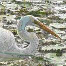 Vesna Klacar-Nedimovic, walkabout:  egret, 2016, Digital Print on Canvas, size 60 x 60 cm
