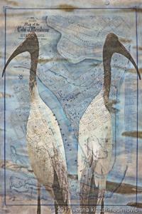 Vesna Klačar-Nedimović, Walkabout: Australian White Ibis, 2017, Digital Print on Hahnemuhle Paper, Image Size: 39 x 26 cm, Paper Size: 43 x 30 cm, Limited Edition: 5